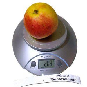 вес 1 яблока сорт Болотовское