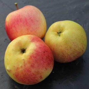 яблоки Болотовское